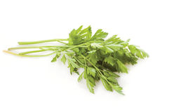Fresh parsley. Bunch of green parsley on the white background stock photos
