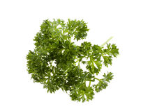 Fresh parsley. On white background Royalty Free Stock Image
