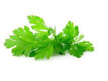 Fresh parsley. On white background Stock Image