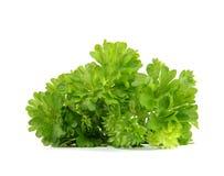 Fresh parsley Royalty Free Stock Photo