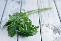 Fresh Parsley Royalty Free Stock Photography