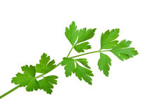 Fresh parsley Royalty Free Stock Image