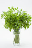 Fresh parsley Stock Photography