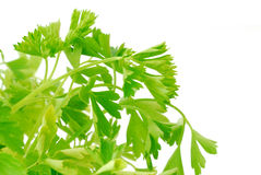 Fresh parsley Royalty Free Stock Photography