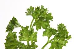 Fresh parsley. Parsley on white Stock Photo