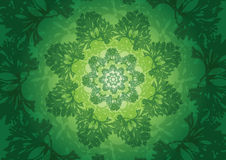 The fresh parsley abstract background royalty free stock images