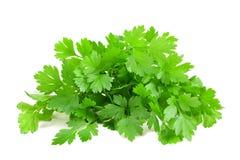 Fresh parsley bunch Stock Image