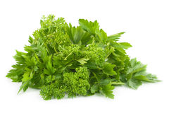 Fresh parsley and celery. Royalty Free Stock Photos