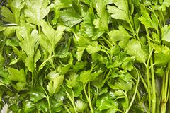 Fresh parsley close up in water. Top view royalty free stock images