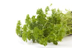 Fresh parsley in closeup. Over white background stock image
