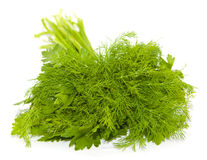 Fresh parsley and dill Royalty Free Stock Photo