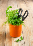 Fresh parsley and dill in cup Stock Photos
