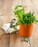 Fresh parsley and dill in cup Royalty Free Stock Photo