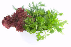 Fresh parsley, dill and lettuce in bowl on white Stock Images