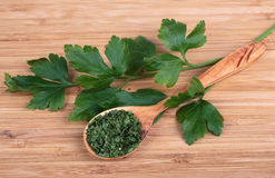 Fresh parsley and dry Stock Image
