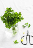 Fresh parsley in a glass jar and vintage scissors Stock Images