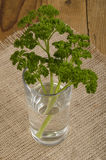 Fresh parsley in a glass of water Royalty Free Stock Images