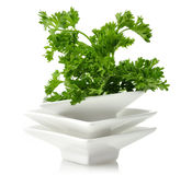 Fresh Parsley Herb Stock Images