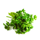 Fresh parsley herb Royalty Free Stock Image