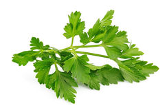 Fresh parsley herb Stock Photography