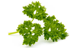 Fresh parsley herb leaves isolated on white background. Stock Photography