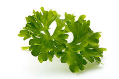 Fresh parsley herb leaves isolated on white background. Royalty Free Stock Image