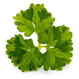 Fresh parsley herb leaves isolated on white background. Royalty Free Stock Images