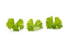 Fresh parsley herb leaves isolated on white background. Royalty Free Stock Photography