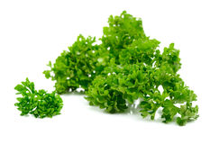 Fresh parsley herb on white. Fresh parsley herb , green leaves of parsley on white background stock photos