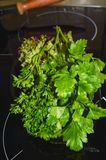 Fresh parsley from home garden. Summer stock photo