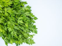 Bunch of fresh parsley isolated stock photo