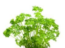 Fresh parsley isolated on white Stock Photo