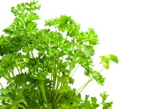 Fresh parsley isolated on white Stock Image