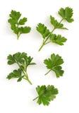 Fresh parsley isolated on white Stock Photos