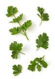 Fresh parsley isolated on white Royalty Free Stock Photos