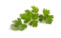 Fresh parsley isolated on white Stock Image