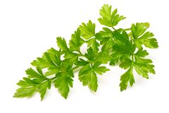 Fresh parsley isolated on white background. Fresh green parsley isolated on white background Royalty Free Stock Photo