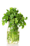 Fresh parsley in a jar of water vertical Royalty Free Stock Photos