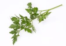 Fresh parsley leaf Royalty Free Stock Photos