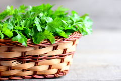 Fresh parsley leaves in a basket. Dietary source of antioxidants, folic acid, vitamin K, vitamin C and vitamin A Royalty Free Stock Image