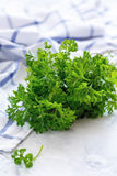 Fresh parsley leaves. Stock Image