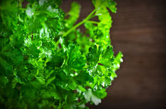 The fresh parsley leaves with drops of dew Stock Photo