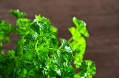 The fresh parsley leaves with drops of dew Royalty Free Stock Photography