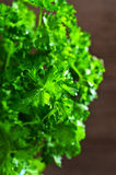 The fresh parsley leaves with drops of dew Royalty Free Stock Photos