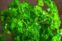 The fresh parsley leaves with drops of dew Royalty Free Stock Image