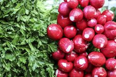 Fresh parsley leaves with drops of water and radish in one of th stock photo