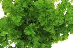 Fresh parsley leaves - green herbs Royalty Free Stock Image