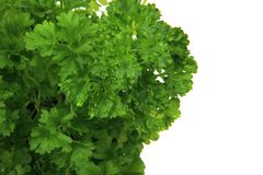 Fresh parsley leaves - green herbs Stock Photos