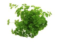 Fresh parsley leaves - green herbs Stock Images