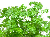 Fresh parsley. macro Stock Photos